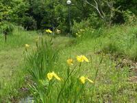 植物に昆虫が訪れています - 千葉県いすみ環境と文化のさとセンター