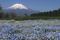花の都公園の春 そのⅢ - kurione9の気儘なフォトブログ