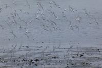 大潮の日の谷津干潟 - そらいろのパレット