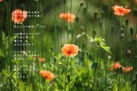 波 - Poetry Garden 詩庭
