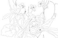 iPad Proで植物スケッチ - 糸巻きパレットガーデン