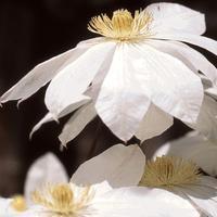 花もまだ残ってる - 鯵庵の京都事情