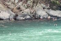 千種川の鳥たち - うちのまわりの自然新聞