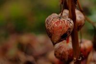 カメラを片手に季節を感じてみた - 森と水の記憶