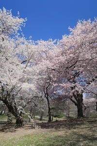 春は始まり NY禅寺体験 - 旅セラあじぇんだ