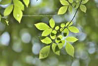 緑の魔法 - お花びより