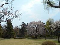 さくら日記@藤田記念庭園2018.4.26 - Tea Wave  ~幸せの波動を感じて~