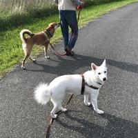 【犬】お留守番犬のお散歩係をしたの巻。 - いつかきっと