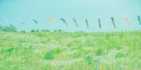 墨の香りで心が落ち着く…パチュリ - tecoloてころのブログ
