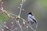 水場のメンバー - 比企丘陵の自然