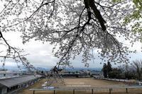 あちこち桜景-2018年-其の3 - NSSCASTLE