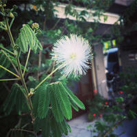 *明日5/5は〜 - salon de thé okashinaohana 可笑的花