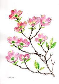 すぐに散った花水木 - がちゃぴん秀子の日記