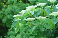 新緑の時間 - 木洩れ日 青葉 photo散歩