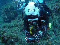 シャンシャン発見!!@八丈島底土 - 八丈島ダイビングサービス カナロアへようこそ!