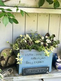 八重咲きペチュニア花衣・黒真珠の寄せ植え - 小さな庭 2