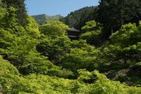 新緑の高源寺 - とりあえず撮ってみました