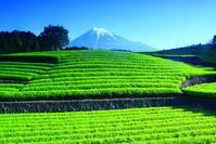 30年4月の富士(33)大淵の茶畑と富士 - 富士への散歩道 ~撮影記~