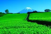30年4月の富士(34)今宮の茶畑と富士 - 富士への散歩道 ~撮影記~
