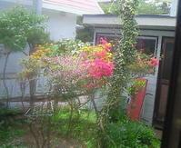 庭は山吹色 - おじさん秀之進の山中リタイヤ生活