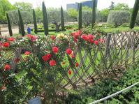 バラ公園 - gyuのバルセロナ便り  Letter from Barcelona