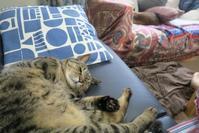 CW - 猫+ねこ+ネコのつれづれ
