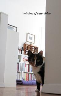 腹減ったコール - Wisdom of Cats