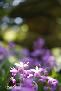 清澄庭園の主は座布団すっぽん - みるはな写真くらぶ