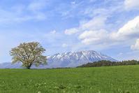 小岩井一本桜と岩手山 - 盛岡写真館