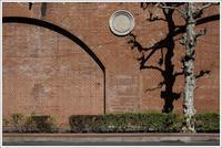 神田散歩 -99 - Camellia-shige Gallery 2