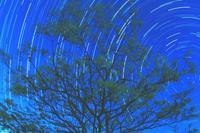 星のなる木 - ブナの写真日記