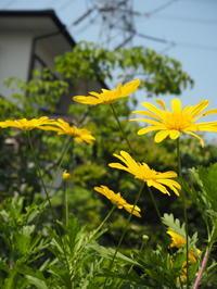 ゴールデンウイークは庭仕事 - グリママの花日記