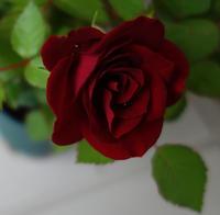 薔薇★意思に反して螺旋は崩れ - 月夜飛行船