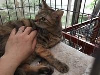 ゴールはリビング ブラウニーズの家猫修行 その39 腹もふGET! - りきの毎日