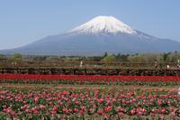 山中湖「花の都公園」 - Photodiary
