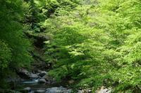 新緑と渓流 - Photodiary