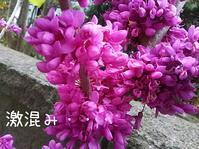 ずおう混み混み - ピアニスト山本実樹子のmiracle日記