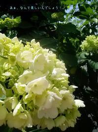 季節は動いております。 - ピアニスト山本実樹子のmiracle日記