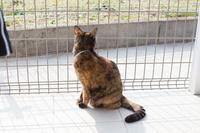 猫テラスでキリッ - にゃんず日記