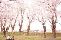 Cherry Blossom 2018-2。 - Precious*恋するカメラ