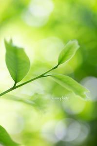 新緑 - My Palpitation