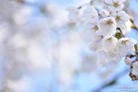往く春 - へたぴ~光画館