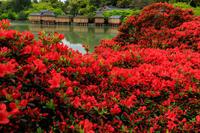 赤に染まる長岡天満宮 - 花景色-K.W.C. PhotoBlog