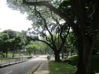 うろうろシンガポール ~ティオンバル・パークでHeritage Treeを見る~ - おうちで冬眠、ときどき放浪