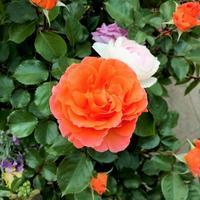 Bouquet - 365歩のマーチ