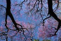 花の回廊大黒尾根 - 峰さんの山あるき