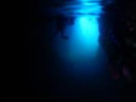 GW終盤です!! - 沖縄ダイビング&フィッシング DSA ブログ