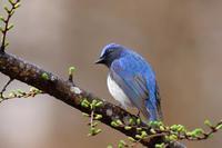 夏鳥達が続々と♪ - 北の大地で野鳥ときどきフライフィッシング