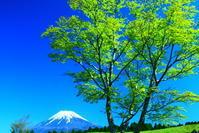 30年4月の富士(35)富士山こどもの国の富士 - 富士への散歩道 ~撮影記~