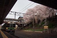 小樽桜めぐり2018#4 - ainosatoブログ02